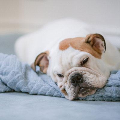 OP Versicherung für Hunde