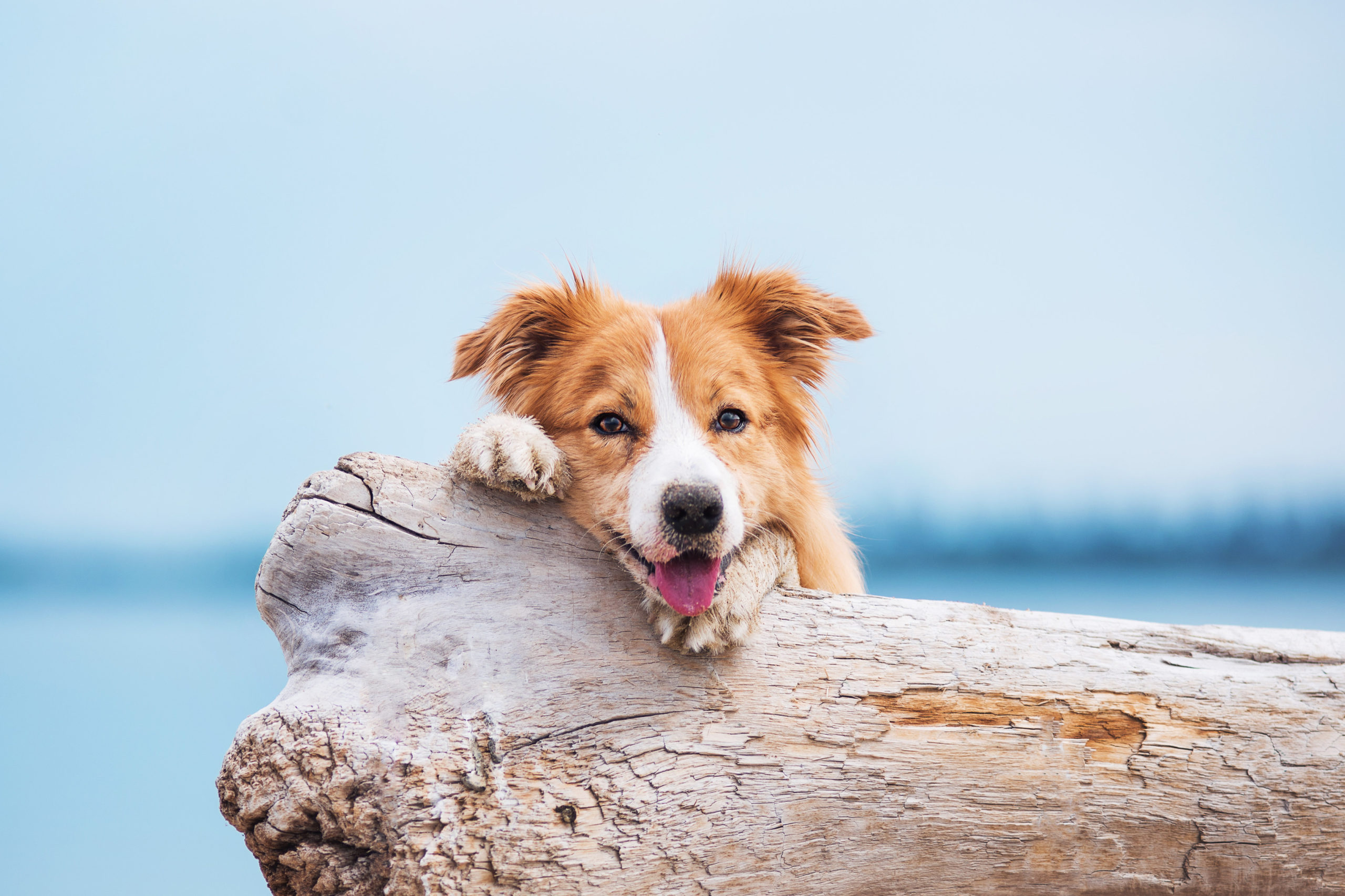 OP Versicherung Hund