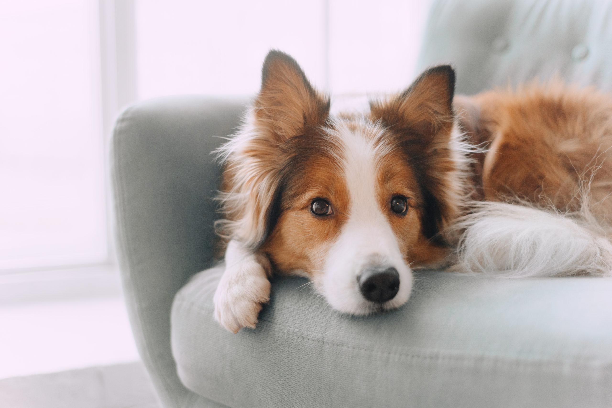 Tarif Easy - Hunde OP Versicherung