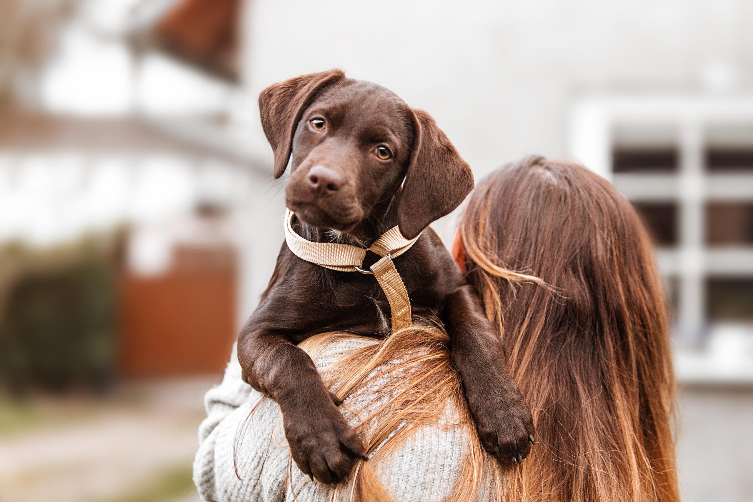 Schutz für Hunde