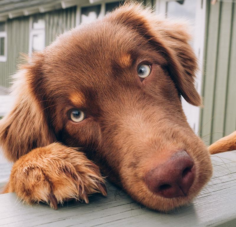 Hund OP Versicherung